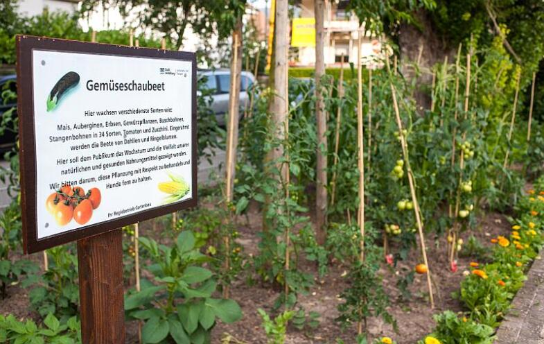 Blick auf ein Gemüsebeet mit Tomaten und Bohnen, Links davon ein Schild, welches dieses Versuchsbeet beschreibt.