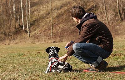 Hund sitzt auf eine Wiese, aufmerksam in die Ferne schauen. Herrchen kommt von hinten mit der Leine