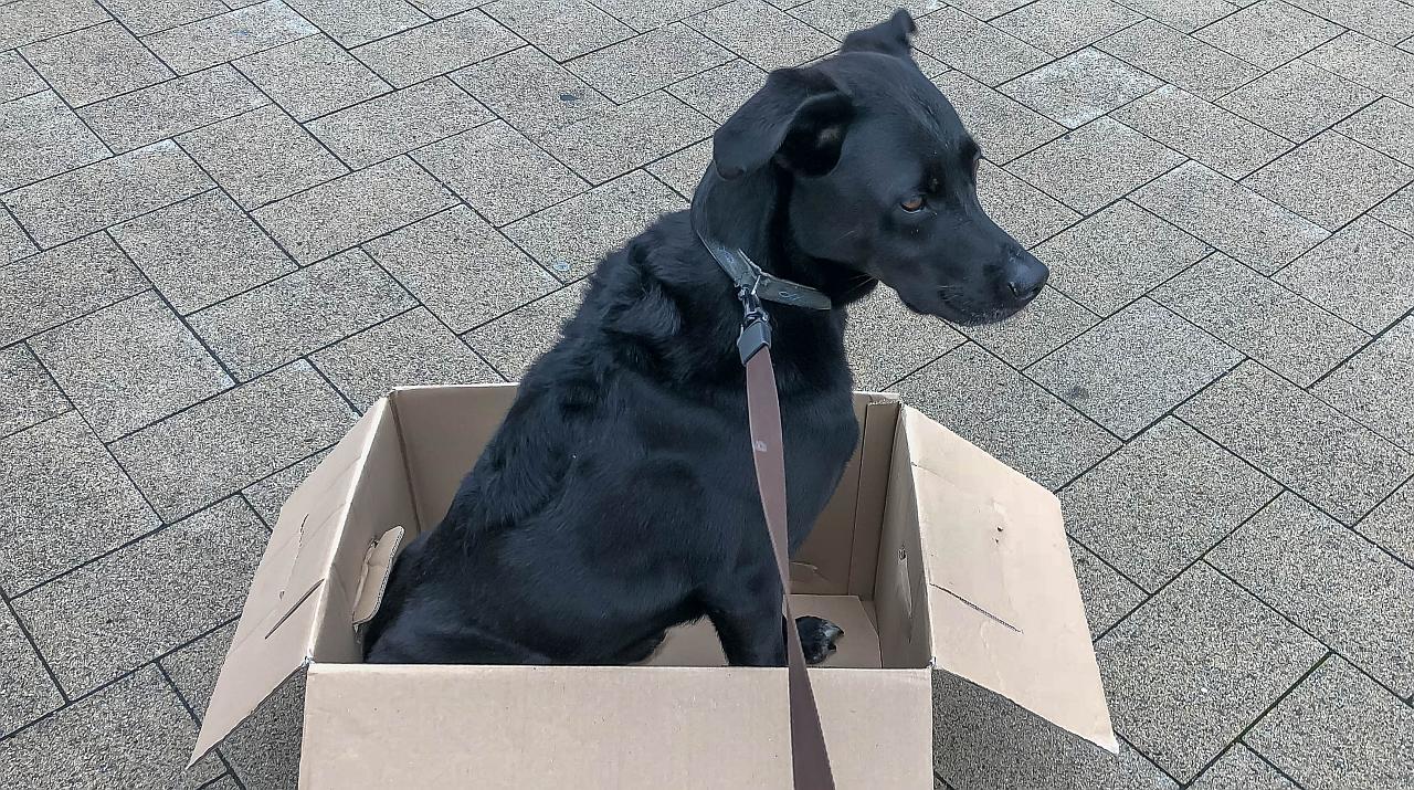 Ein schwarzer Hund sitzt im Karton
