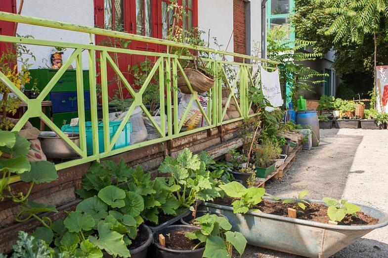 Pflanzen in leicht transportierbaren Behältnissen vor den Breidenbachstudios